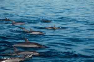 10. Puerto Princesa Dolphin Watching Activity